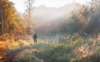 Осенняя охота 2018 открытие белгородская обл