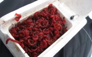 Как сохранить мотыля живым для продажи
