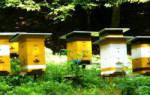 Нормы содержание пчел на приусадебном участке