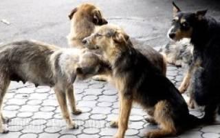 Кто должен заниматься отловом бродячих собак в городе